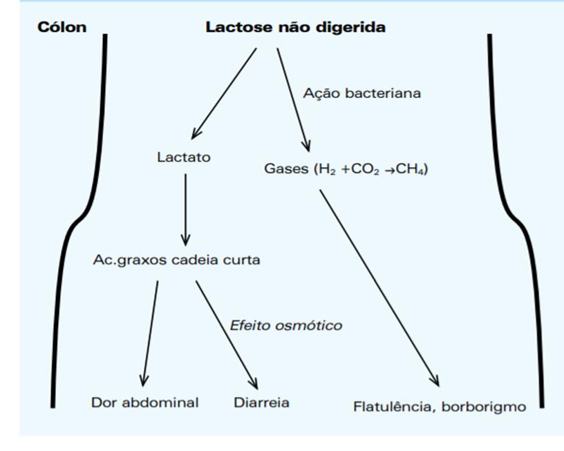 hidrogenio-expirado-lactose
